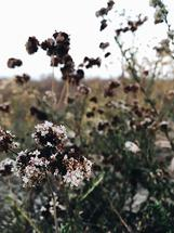Mountain Top Wildflower... by Kelsey Elliott
