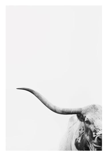 art prints - Brandir by Amy Carroll