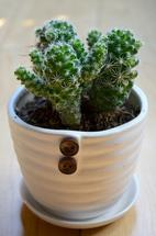 Potted Cactus by Wendy