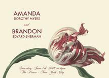 Maroon and Cream Tulip... by Aleksandra Vujkov