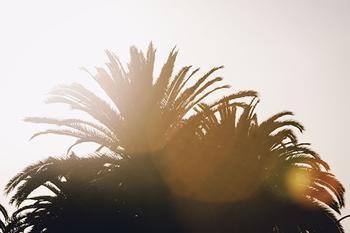 norcal sunshine