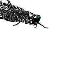 Bush cricket study by Bethan Osman