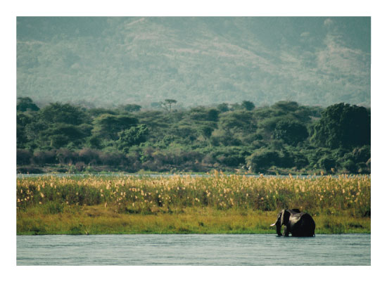 art prints - Zambezi Elephant by Camille Garnier