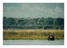Zambezi Elephant by Camille Garnier