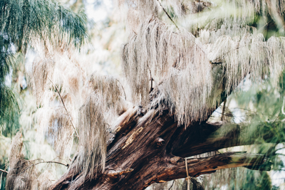 art prints - A Dream Tree by Janet Cruz