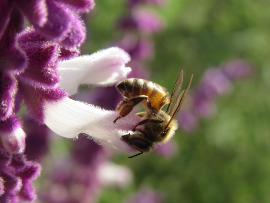 art prints - Beauty and the Bee by Patricia Quon