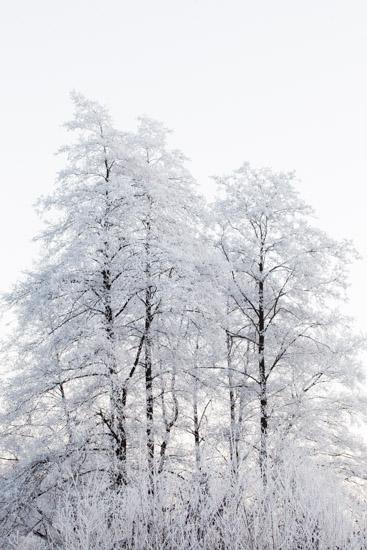 art prints - Winter nature by Magdalena Kucova