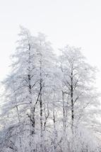 Winter nature by Magdalena Kucova