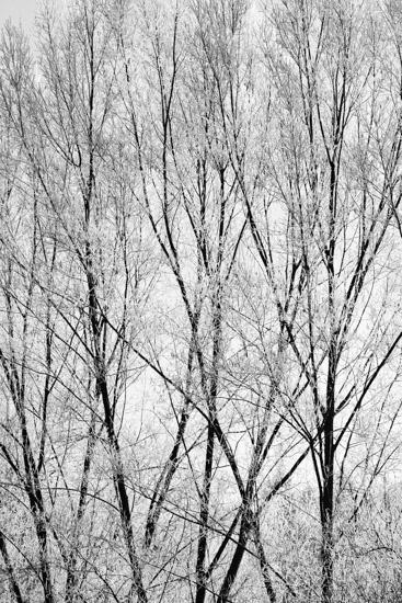 art prints - Winter trees by Magdalena Kucova