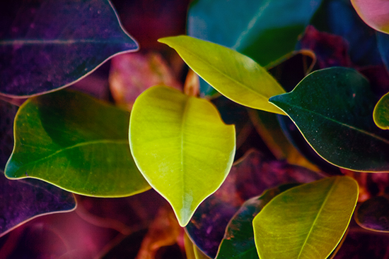 art prints - Colorful leaves by Igor