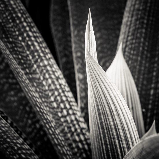 art prints - Nature Textures 01 by Ramiro Pires