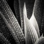Nature Textures 01 by Ramiro Pires