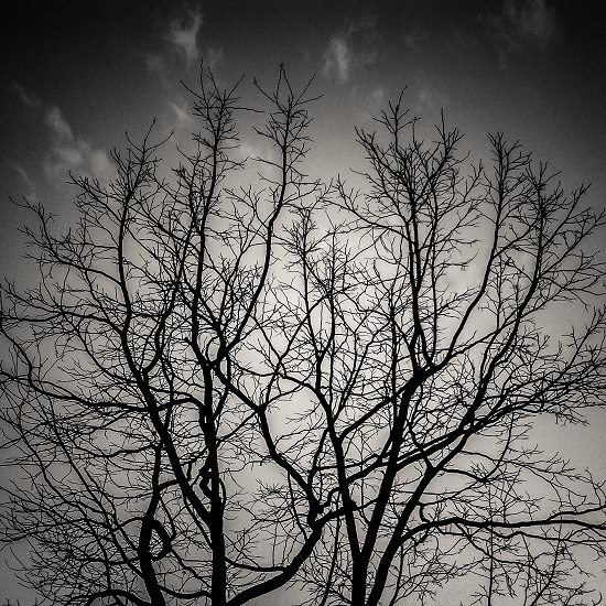 art prints - Branches by Ramiro Pires