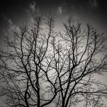 Branches by Ramiro Pires