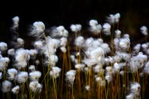 Wind Blown by Debbie Shiffer