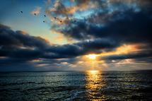 Sunset Flight by Debbie Shiffer