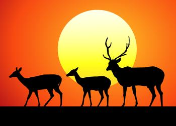 Sunset with Deer