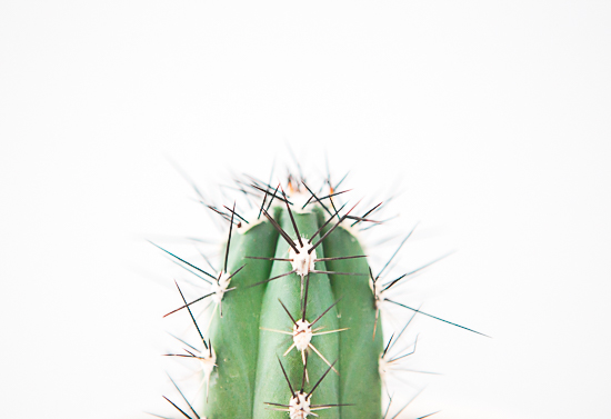 art prints - cactus no. 3 by Modern Abode