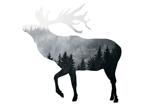 art prints - Silver Elk by Laura Morris
