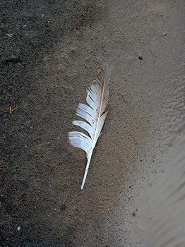 Feather (Dyrhólaey, Iceland)