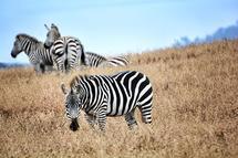Stripes by Debbie Shiffer
