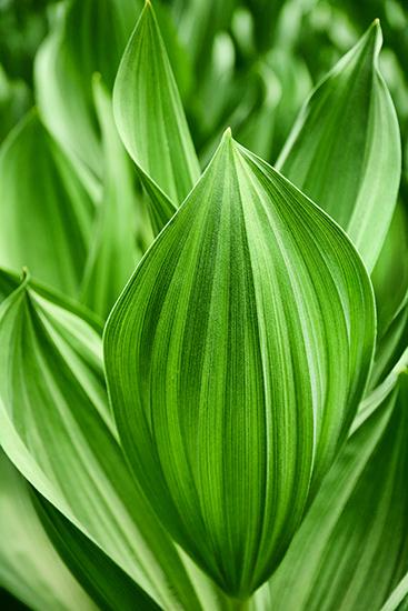 art prints - Leaf Patterns by Debbie Shiffer