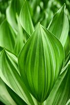 Leaf Patterns by Debbie Shiffer