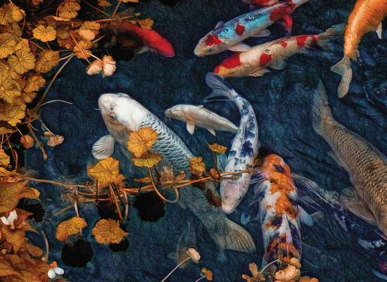 art prints - Beautiful Koi by A Maz Designs