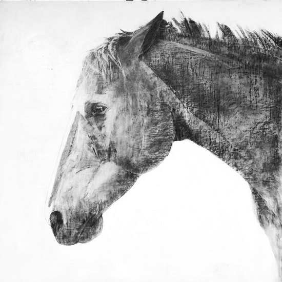 art prints - Black horse by Patricia Robitaille