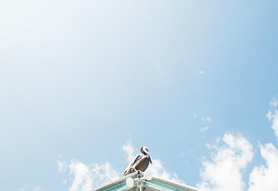art prints - On his perch by Kira Noel Oschipok