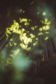Light + Leaf