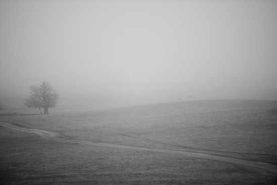 art prints - Foggy Morning by Crystal Lynn Collins