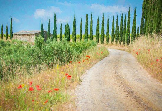 art prints - Tuscan Driveway by Steve Burkett