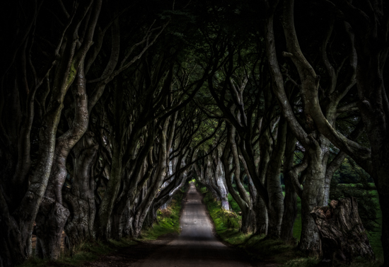 art prints - The Dark Hedges by Steve Burkett