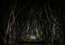 The Dark Hedges by Steve Burkett