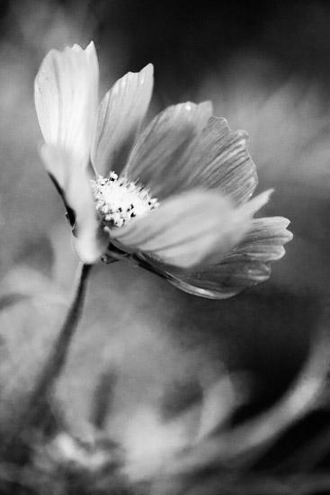 art prints - Delicate flower by Magdalena Kucova