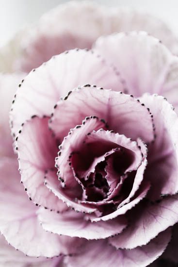 art prints - Nature close-up by Magdalena Kucova