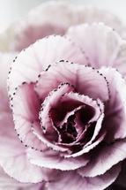 Nature close-up by Magdalena Kucova