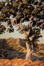 California Color by James Davis