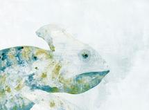 Chameleon by Agata Wojakowska