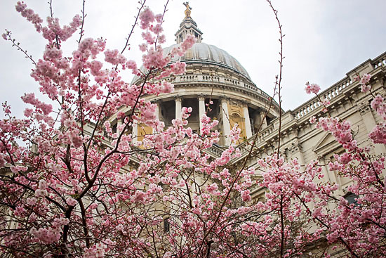art prints - St. Paul's Cathedral in Spring by Ashley Daley