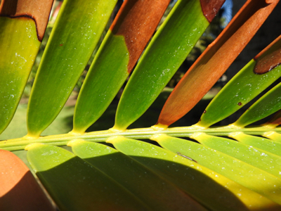 art prints - Huntington_Palm Frond by Gill Miller