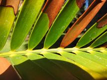 Huntington_Palm Frond by Gill Miller