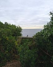 Bird's View by Nikita Almer