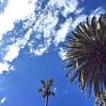 Palm Sky by Nikita Almer