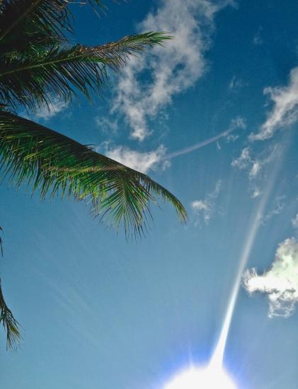 art prints - Sun Rays And Palm Trees by Nikita Almer