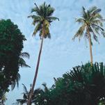 Jungle Sky by Nikita Almer