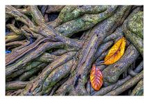 Mangrove Roots Abstract... by Leslie Ware