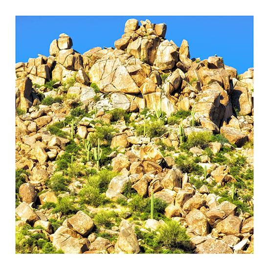 art prints - Saguaro Cactus and Boulders by Leslie Ware