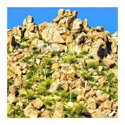 Saguaro Cactus and Boulders